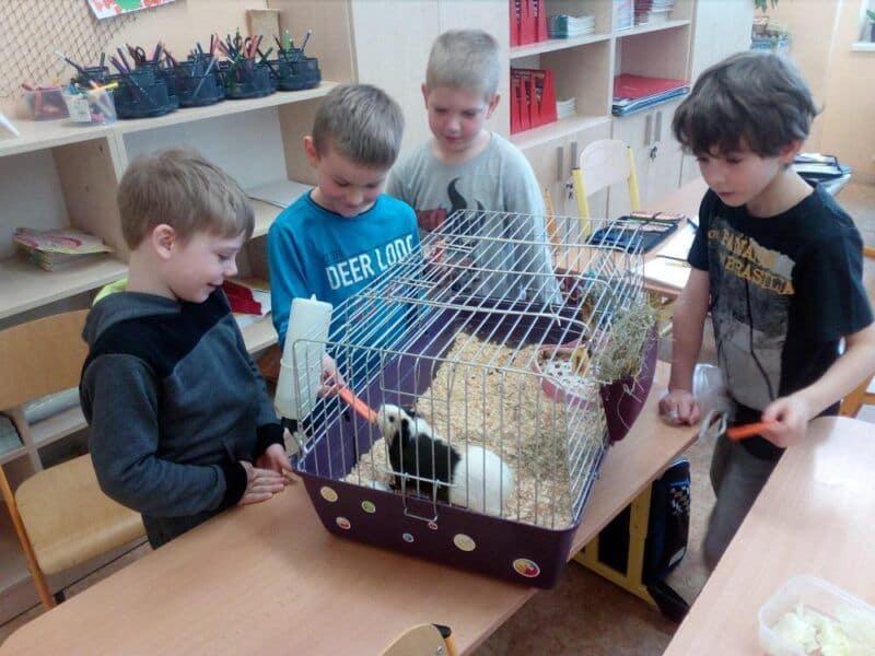 Projekt Zvířata