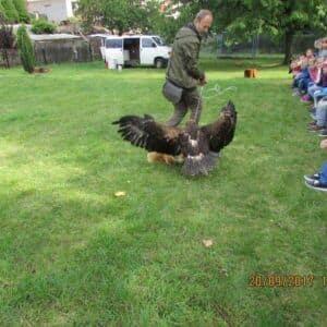 Galerie Vystoupení ornitologů ve školní družině scvičenými ptačímidravci