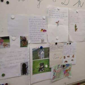 Galerie Projekt Zvířata v1.A