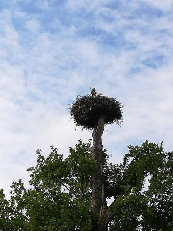 Chomutovský zoopark