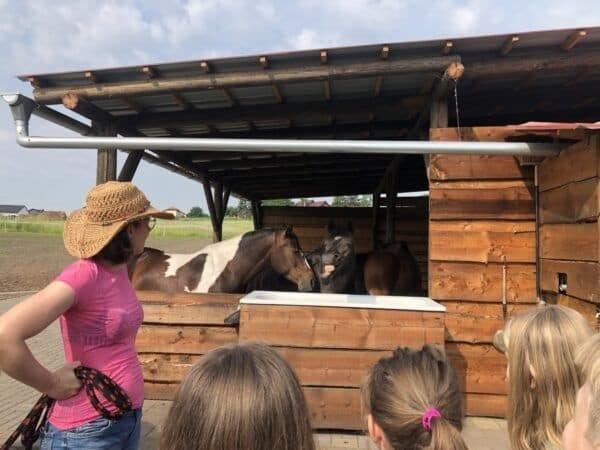 Den na farmě s koňmi